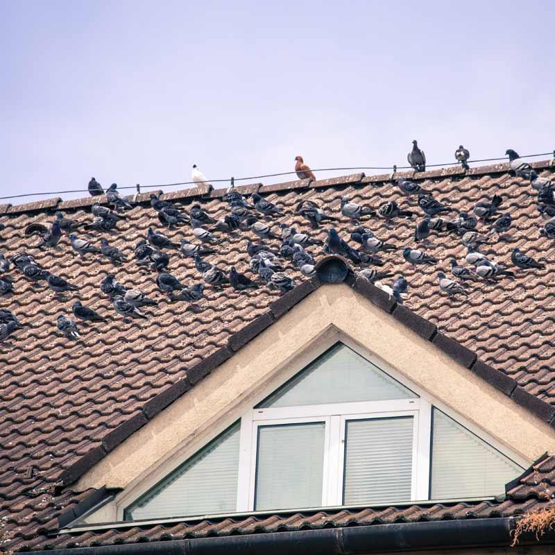 Εγκατάσταση Συστημάτων Απώθησης Πτηνών